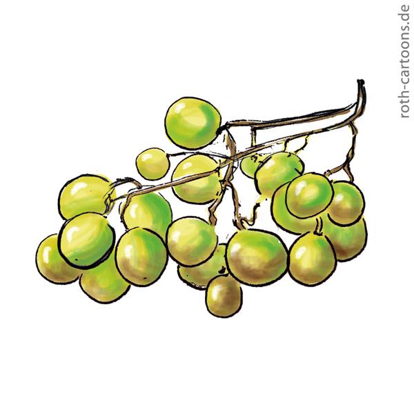 illustration verdorbene trauben