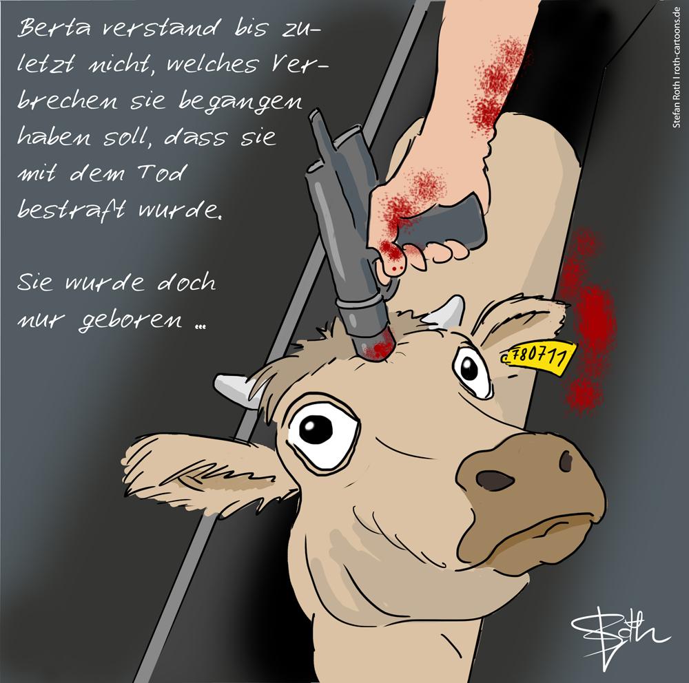 Kuh im Tötungsstand beim Bolzenschuss