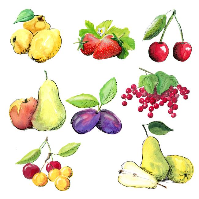 Aquarelle verschiedener Obstsorten