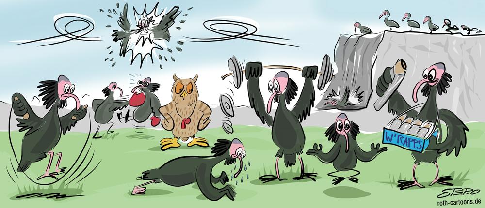 Cartoon Trainingscamp für die Wiederansiedlung des Waldrapps in Überlingen